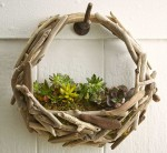 Driftwood Succulent Wall Garden Adds Nature to Your Decor