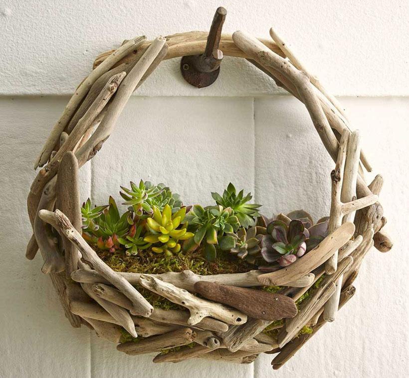 Driftwood Succulent Wall Garden
